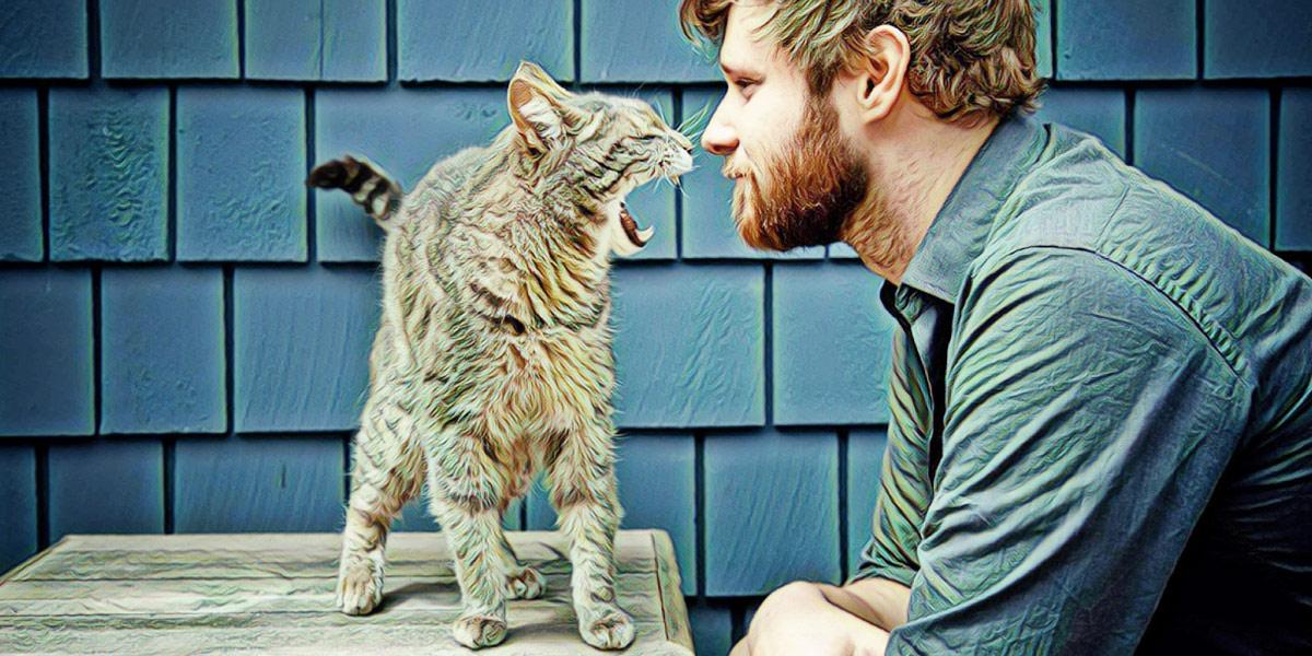 Человек и кошки смешные картинки, рисунки шаблоны марта