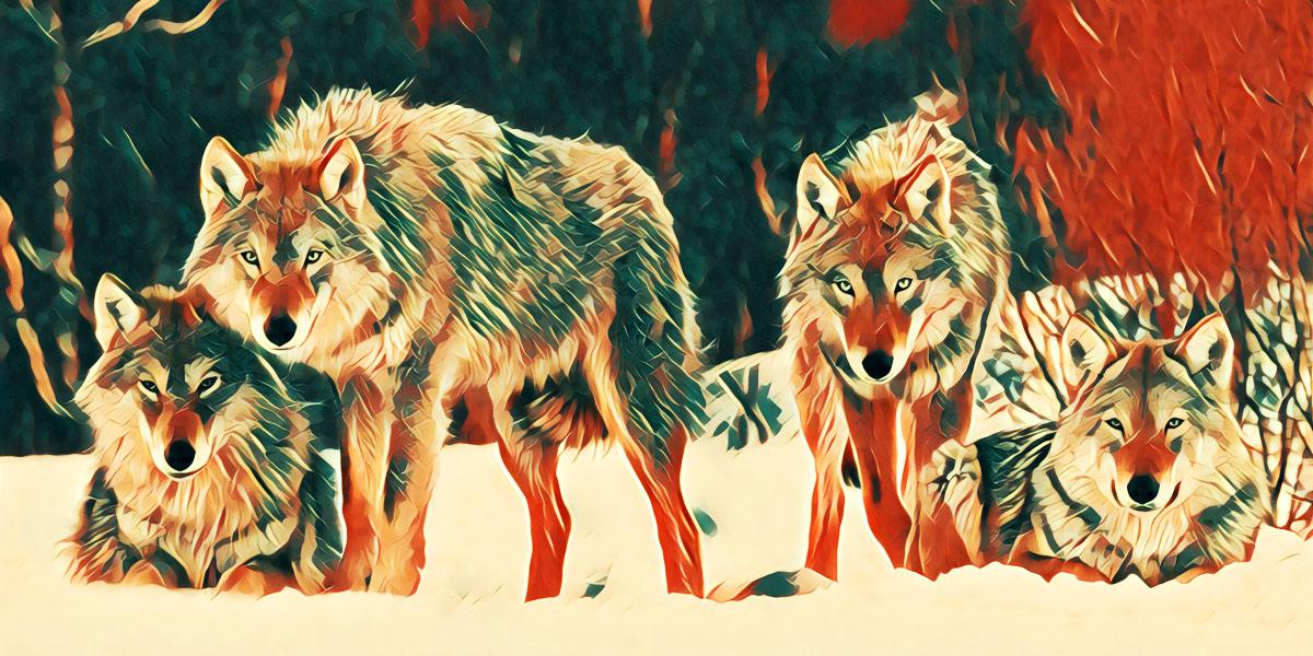 Как найти работу в этих волчьих условиях?