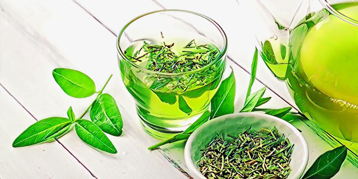 свойства зеленого чая польза и вред