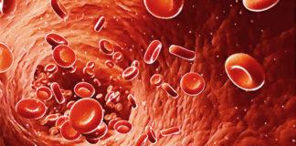 46 интересных фактов о крови
