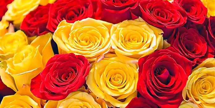 Сочетание с другими цветами