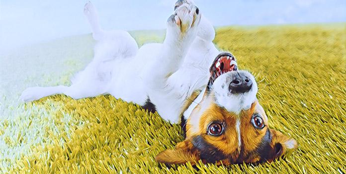 Могут ли животные быть счастливыми