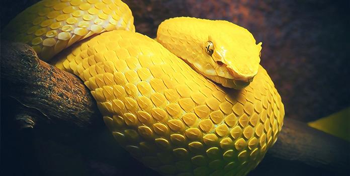 Нетерпимость жёлтого цвета